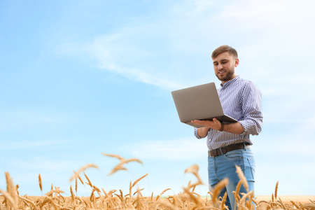 Young agronomist with laptop in grain field. Cereal farming