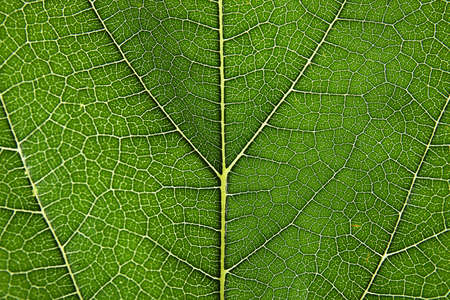 Beautiful fresh green leaf as background, closeup