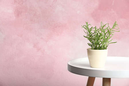 Pot with fresh rosemary on table against color background