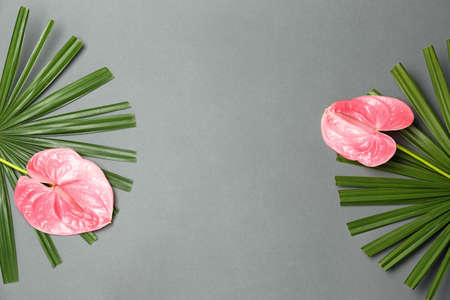 Creative composition with anthurium flowers and tropical leaves on gray background, flat lay