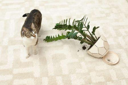 Cat near overturned houseplant on light carpet