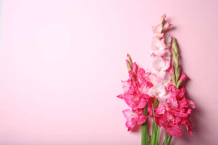 Flat lay composition with beautiful gladiolus flowers on color background Stock fotó - 106483034