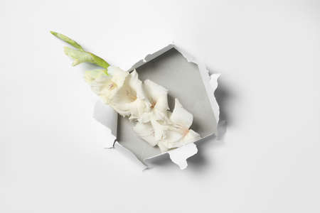 Composition with beautiful gladiolus flowers and torn paper Stock fotó - 106483051