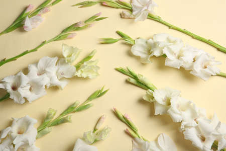 Flat lay composition with beautiful gladiolus flowers on color background