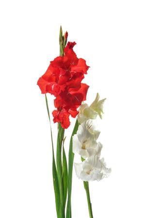 Beautiful gladiolus flowers on white background Stock fotó - 106483396