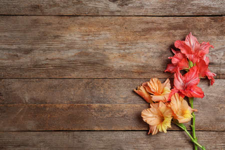 Flat lay composition with beautiful gladiolus flowers on wooden background Stock fotó