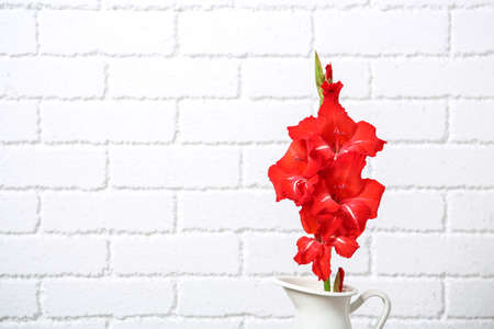 Jug with beautiful gladiolus flowers against brick wall
