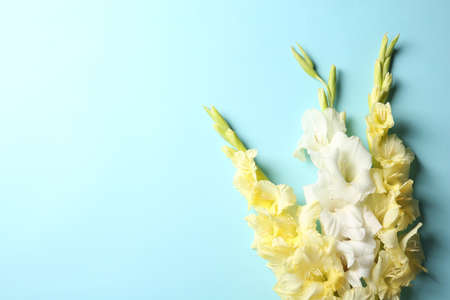 Flat lay composition with beautiful gladiolus flowers on color background Stock fotó - 106484912