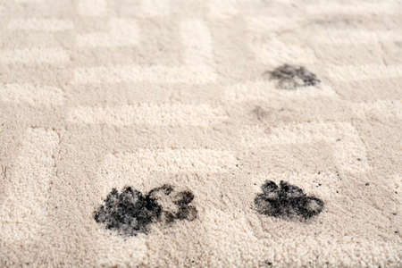Trail of muddy paw prints on beige carpet