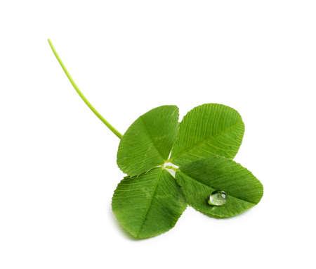 Trébol de cuatro hojas verde sobre fondo blanco. Foto de archivo