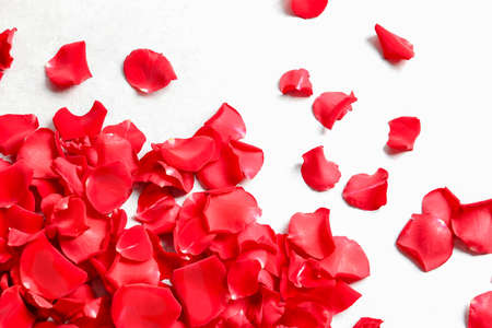 Red rose petals on light background, top view