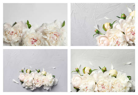Set with beautiful peony flowers on grey background