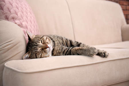 Cute cat resting on sofa at home Archivio Fotografico