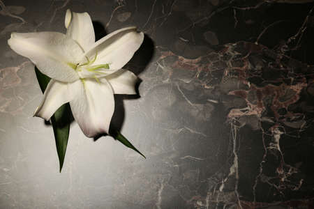 Beautiful lily and space for text on dark marble background. Funeral flower Stock Photo