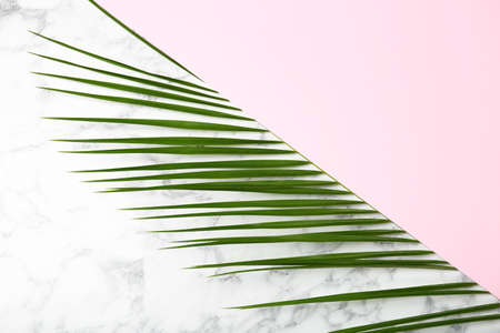 Composition with tropical date palm leaves on marble background, top view 写真素材