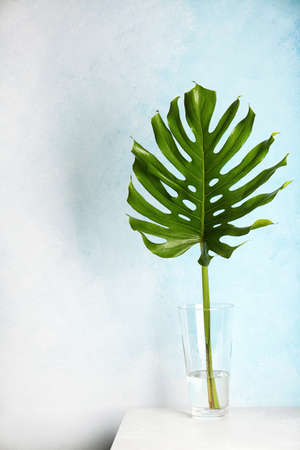 Vase with tropical monstera leaf on table near color wall