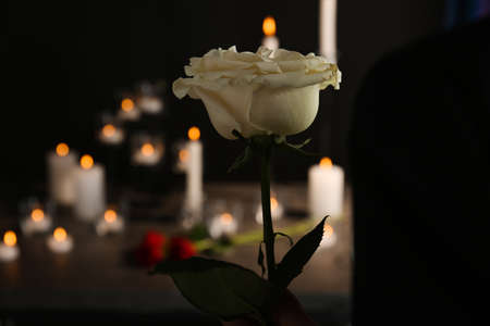 Beautiful white rose on blurred background. Funeral symbol Stock Photo