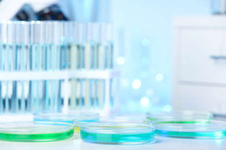 Petri dishes with liquid on table in laboratory. Chemical analysis Stock Photo