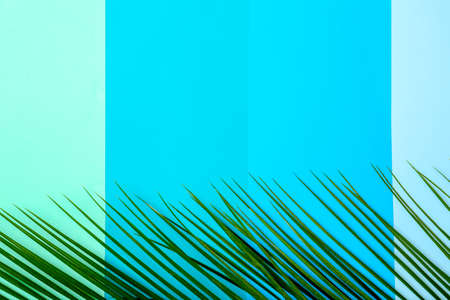 Fresh tropical date palm leaf on color background, top view