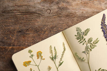 Wild dried meadow flowers in notebook on wooden background, top view