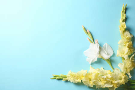 Flat lay composition with beautiful gladiolus flowers on color background Stock fotó - 106786054
