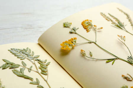 Wild dried meadow flowers in notebook on table, closeup