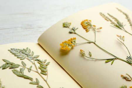 Wilde getrocknete Wiesenblumen im Notizbuch auf Tisch, Nahaufnahme Standard-Bild