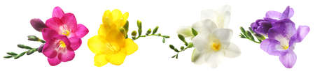 Set with Freesia flowers on white background