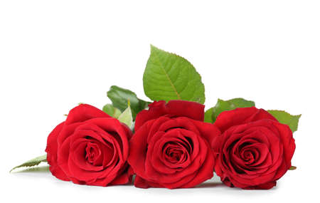 Beautiful red roses on white background. Funeral symbol