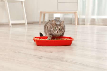 Entzückende graue Katze nahe Katzentoilette drinnen. Tierpflege