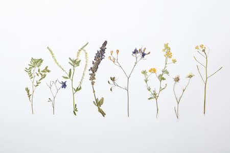 Wild dried meadow flowers on white background, top view Фото со стока - 107876400