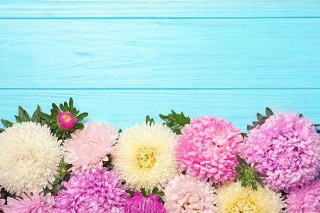 Beautiful aster flowers and space for text on wooden background, flat lay Stock Photo