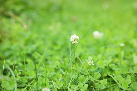 Green meadow with blooming wild flowers, closeup Stock Photo