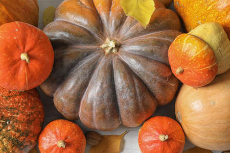 Viele verschiedene Kürbisse als Hintergrund, Nahaufnahme. Herbstferien