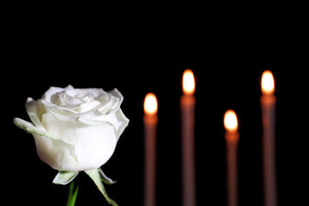 White rose and blurred burning candles in darkness, space for text. Funeral symbol
