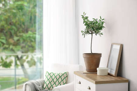Pot with olive tree in cozy interior. Space for text