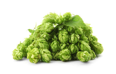 Fresh green hops on white background. Beer production Banco de Imagens