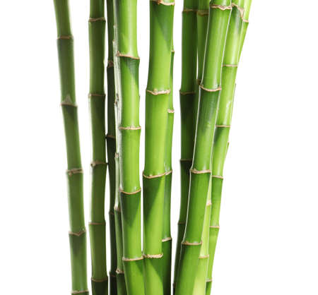 Beautiful green bamboo stems on white background
