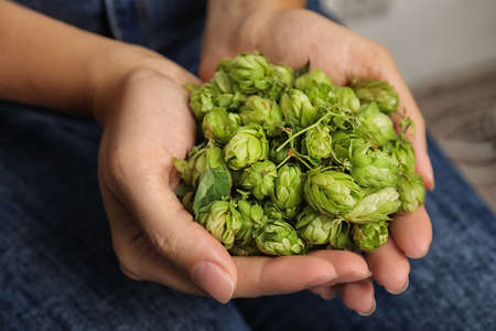 Woman holding fresh green hops, closeup. Beer production Archivio Fotografico - 109387415