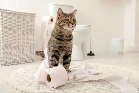 Lindo gato jugando con rollo de papel higiénico en el baño.