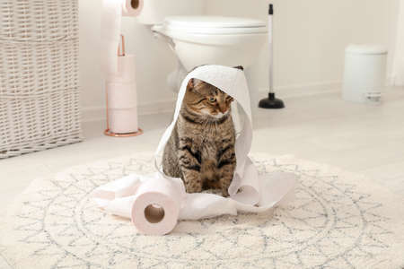 Simpatico gatto che gioca con un rotolo di carta igienica in bagno Archivio Fotografico