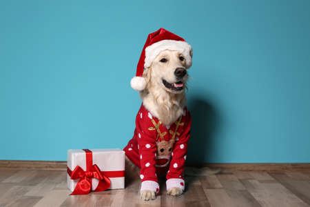 Cute dog in Christmas sweater and hat with gift on floor near color wall 免版税图像