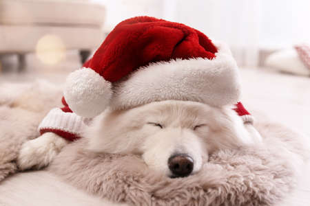 Cute dog in warm sweater and Christmas hat on floor at home Standard-Bild