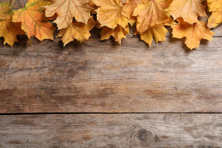 Composition with autumn leaves and space for text on wooden background, top view
