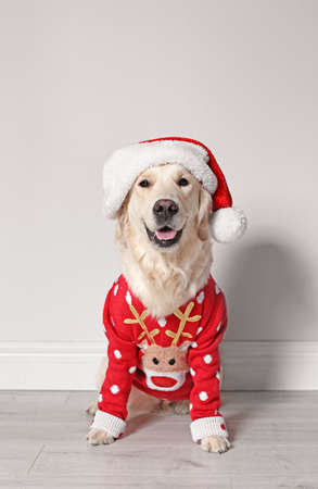 Cute dog in Christmas sweater and hat on floor