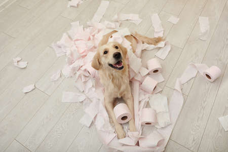 Schattige hond spelen met wc-papier in de badkamer thuis