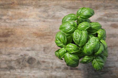 Fresh basil in pot on wooden background, top view with space for text Stock fotó
