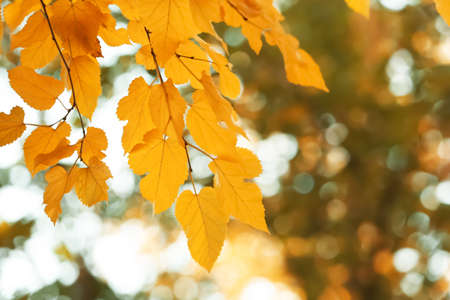 Bright leaves on blurred background, outdoors. Autumn day Stock Photo