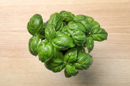 Fresh basil in pot on wooden background, top view
