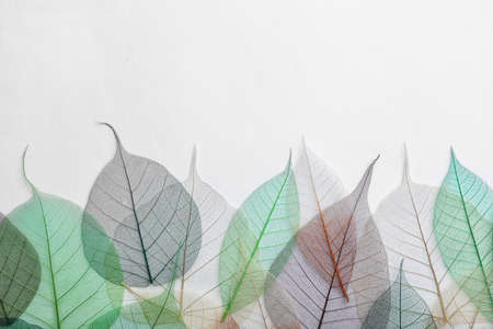 Beautiful decorative skeleton leaves and space for text on white background, top view Reklamní fotografie